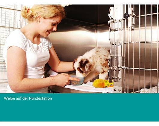 Kundenbild klein 8 Baab Tierklinik am Alzeyer Kreuz